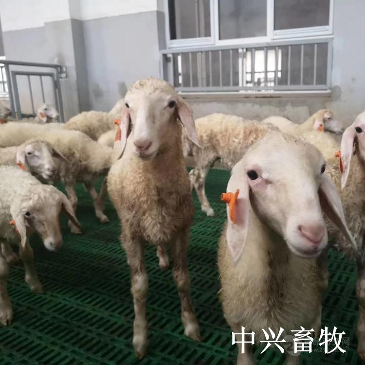 纯原料塑料羊粪板奶羊用塑料羊床现代化羊舍专用羊漏粪板
