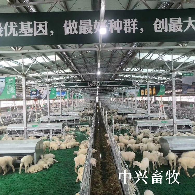 无缝连接塑料羊床板养羊专用漏粪板塑料羊粪板送货上门
