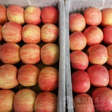 红富士苹果价格产地价格行情山东省红富士苹果产地价格