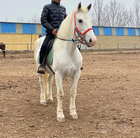 马匹交易价位 大型马匹养殖场批发品种马