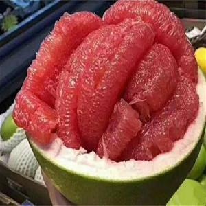 泰���t��石�o籽青柚苗/�t��石青柚苗�~子特征