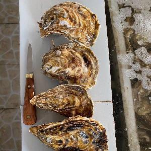 山東牡蠣,當天打撈發貨,肥度好,品質高