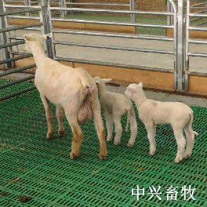 新疆塑料羊粪板卡扣拼接塑料羊床羊舍专用羊粪板安装