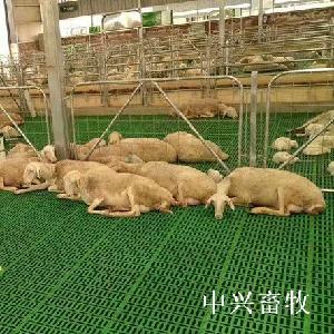 防滑保温塑料羊粪板新型奶羊漏粪地板塑料羊床板厂家直营