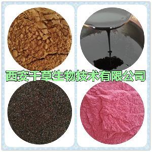 石松提取物水溶浓缩粉 生产石松浸膏粉