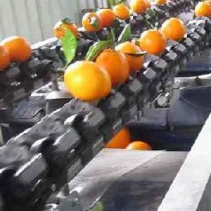 自动化芒果分选机全自动圆形分选设备工作效率高
