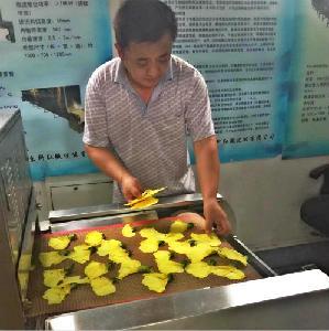 微波菊花茶干燥设备