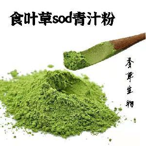 食叶草粉供应商 食叶草SOD青汁粉 食叶草全粉200目 蛋白草粉