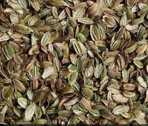 供應明日葉種苗/種子,明日葉茶