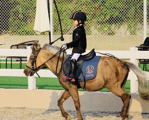 宠物矮马价格 活马儿童骑乘马养殖场 驯养温顺老实优良马匹