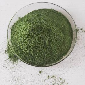 墨角藻提取物多糖30%  墨角藻速溶粉 墨角藻粉